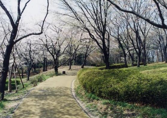写真:歩経路(黄緑)